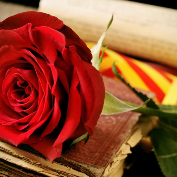 Rm Assessors felicita als seus clients i amics per Sant Jordi, patró de Catalunya
